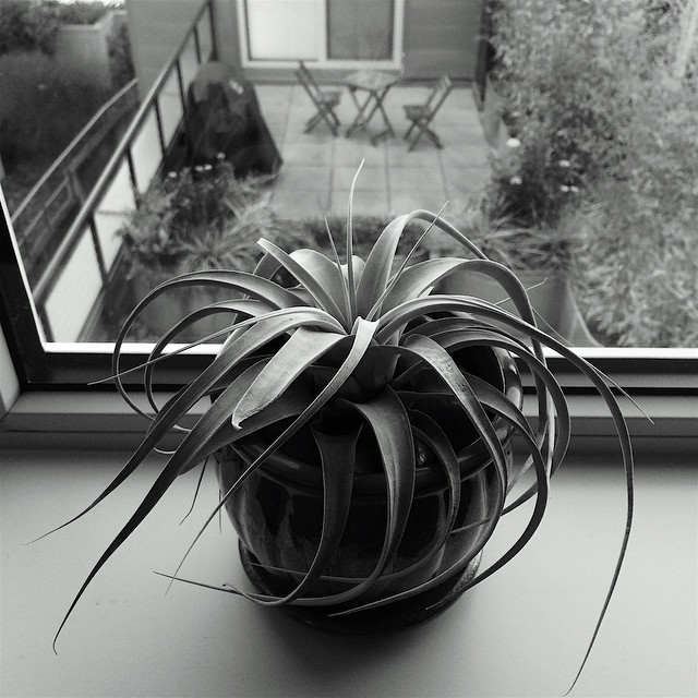 Air plant on windowsill in light