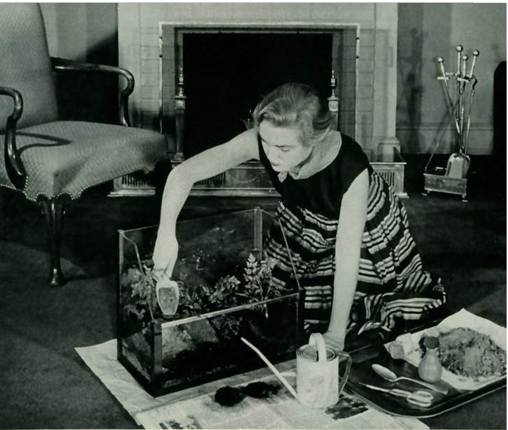 Classic Terrarium in 1954. A black and white photograph of lady making a terrarium with plants