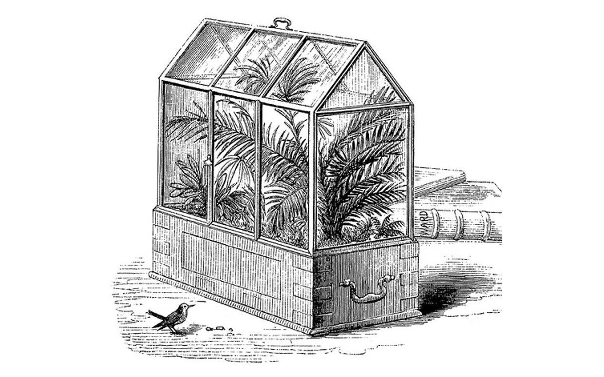 Traditional Wardian Case terrarium large with ferns. A small bird is present in this drawing.